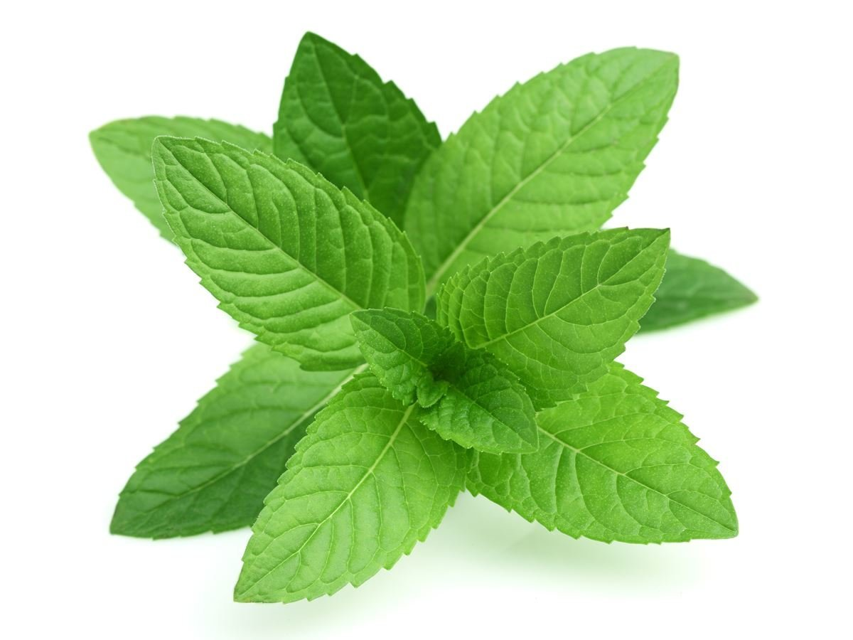 Mint as a Home Remedie for Acne