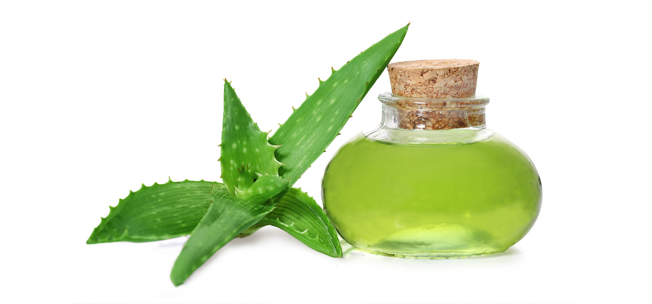 Using Aloe Vera Plant On Natural Hair